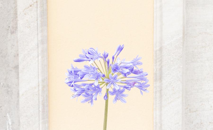 Blume-2-neu