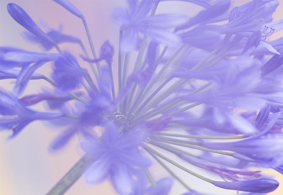 Blume-3