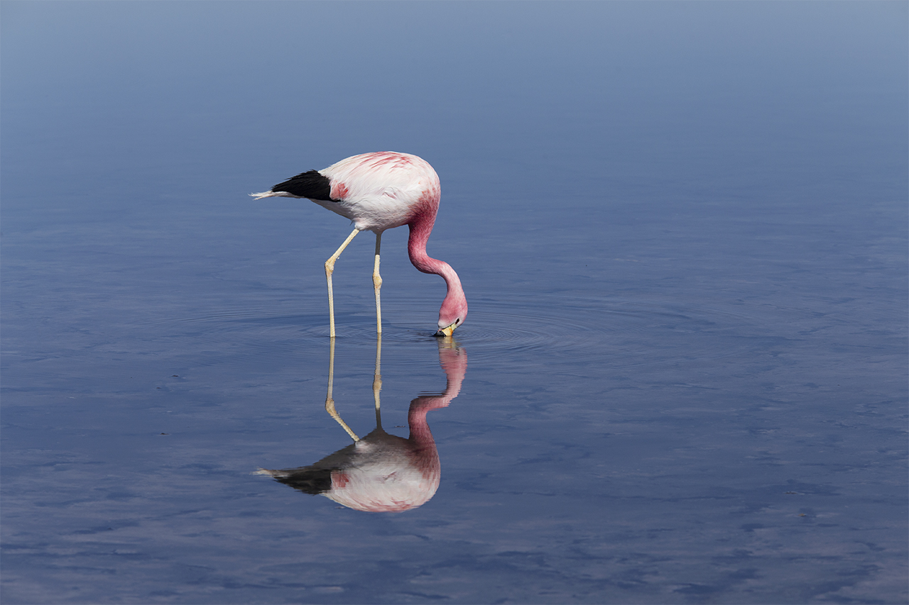 8 Flamingo-close-up