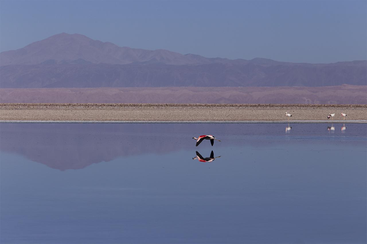 9 Flamingo flying